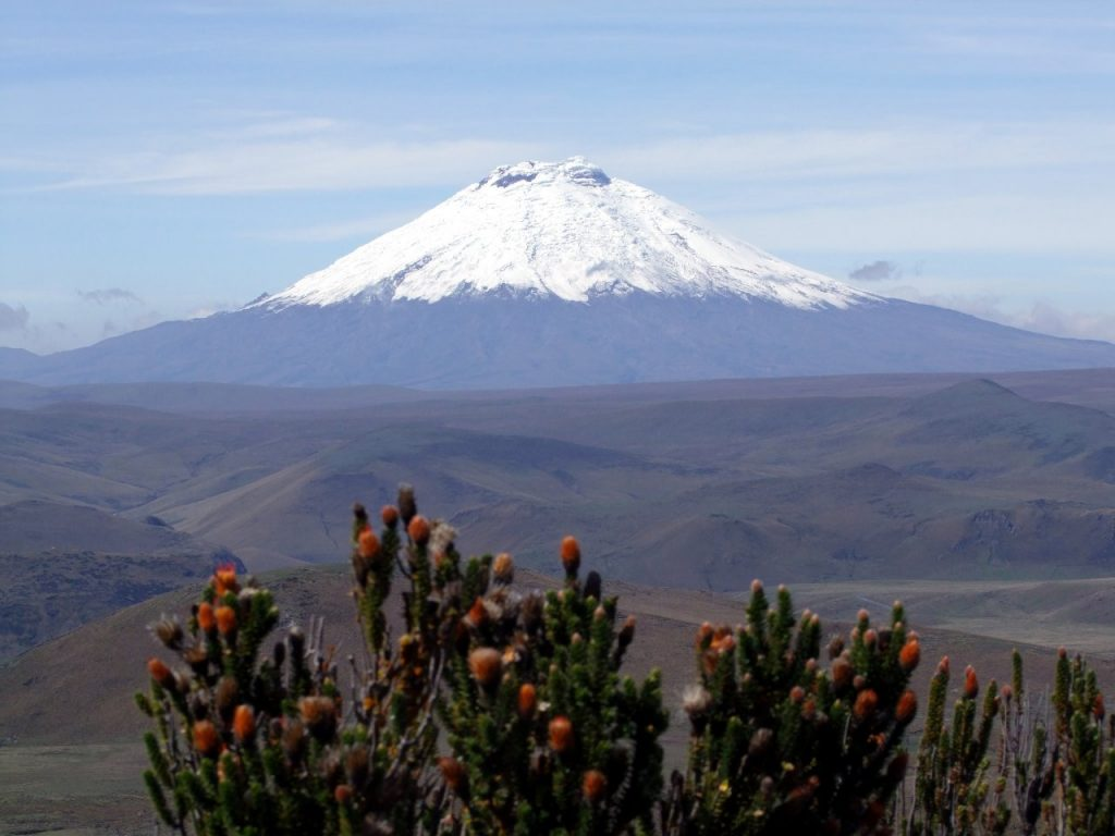 Cotopaxi and chuquiragua, the distinctive flame-tipped plant of the Ecuador paramo