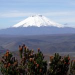 Cotopaxi and chuquiragua, the distinctive flame of the Ecuador paramo