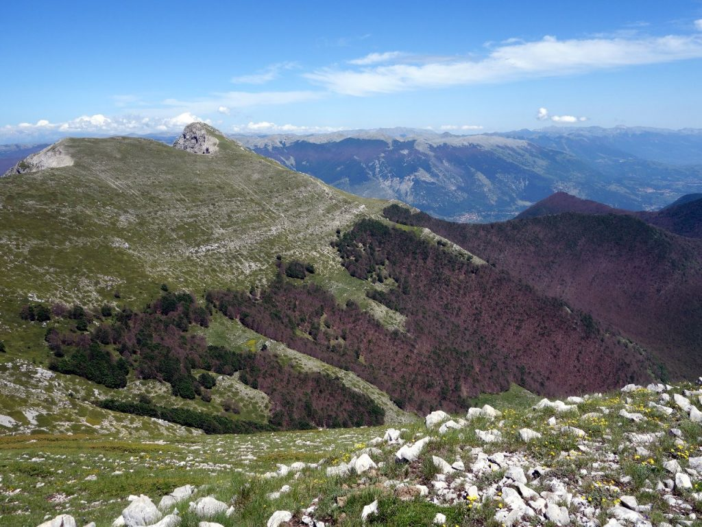 Lush forest reaching up the side of Pizzo Deta to nearly 1700m