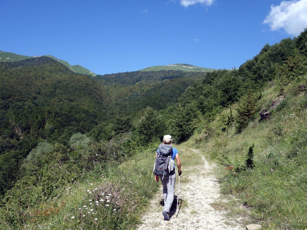 The trail from Cesacastina up Monte Gorzano passes through dense forest
