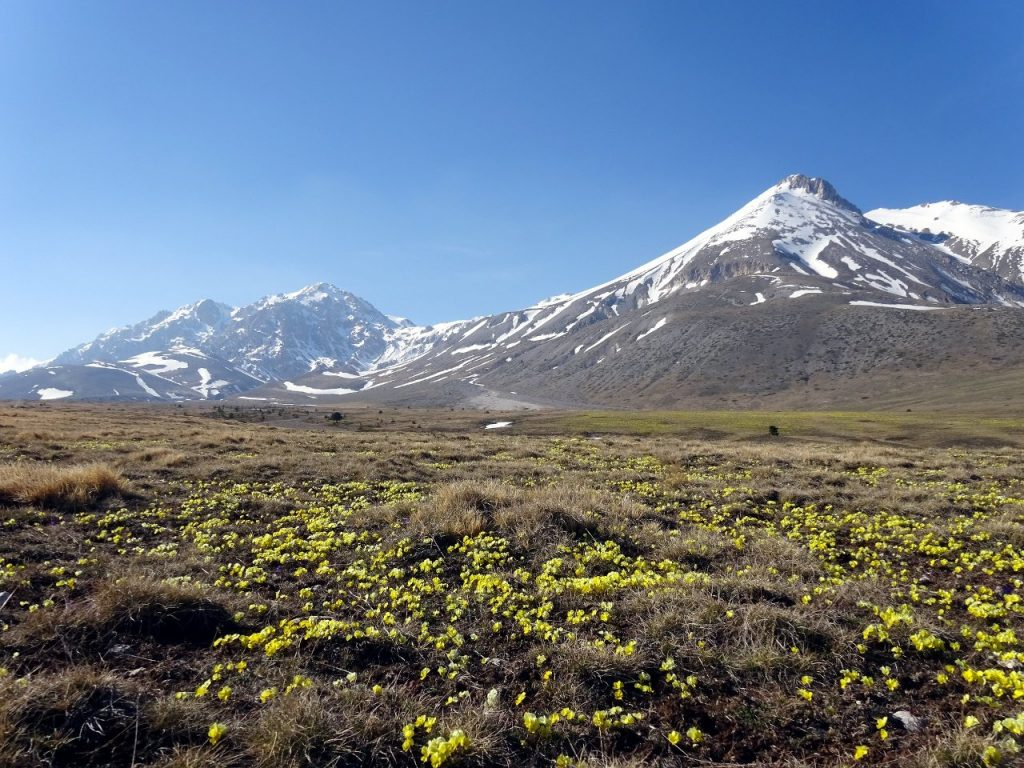 Monte Prena and Monte Camicia seen across flower meadows in Campo Imperatore