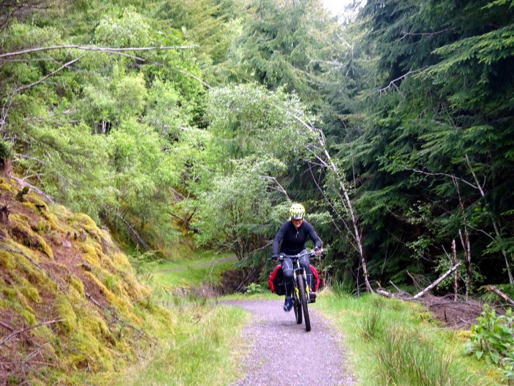 Pleasant undulating trail through forest