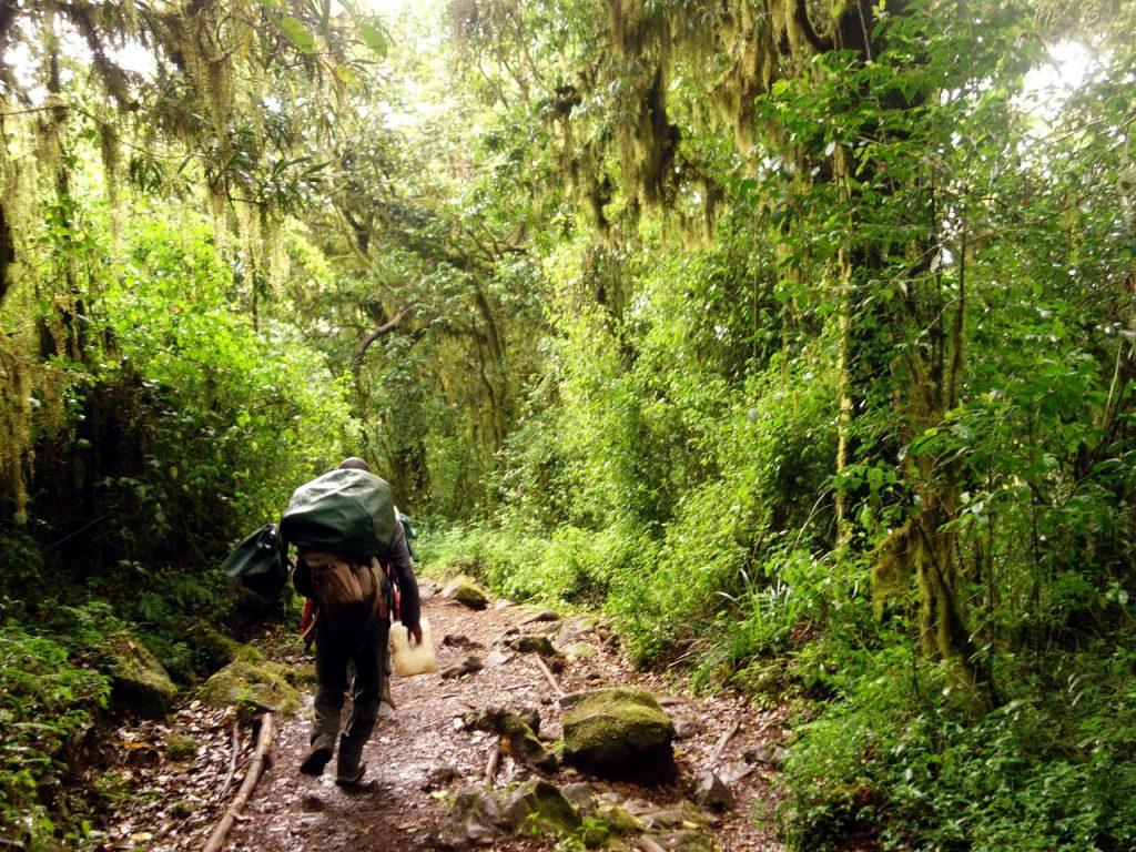 In jungle below Mandara Huts