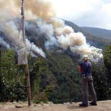 The cause of Himalayan forest fires
