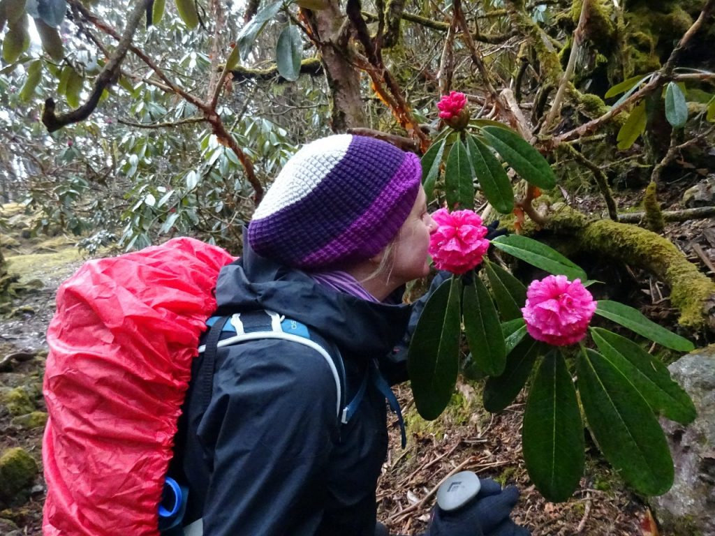 The forest was alive with rhododendrons