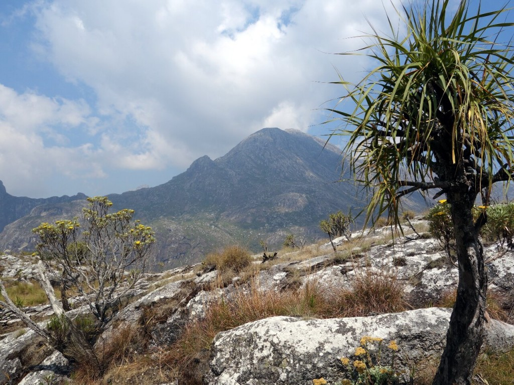 North Peak, Mulanje, and a vellozia splendens, seen from above the Chambe Basin
