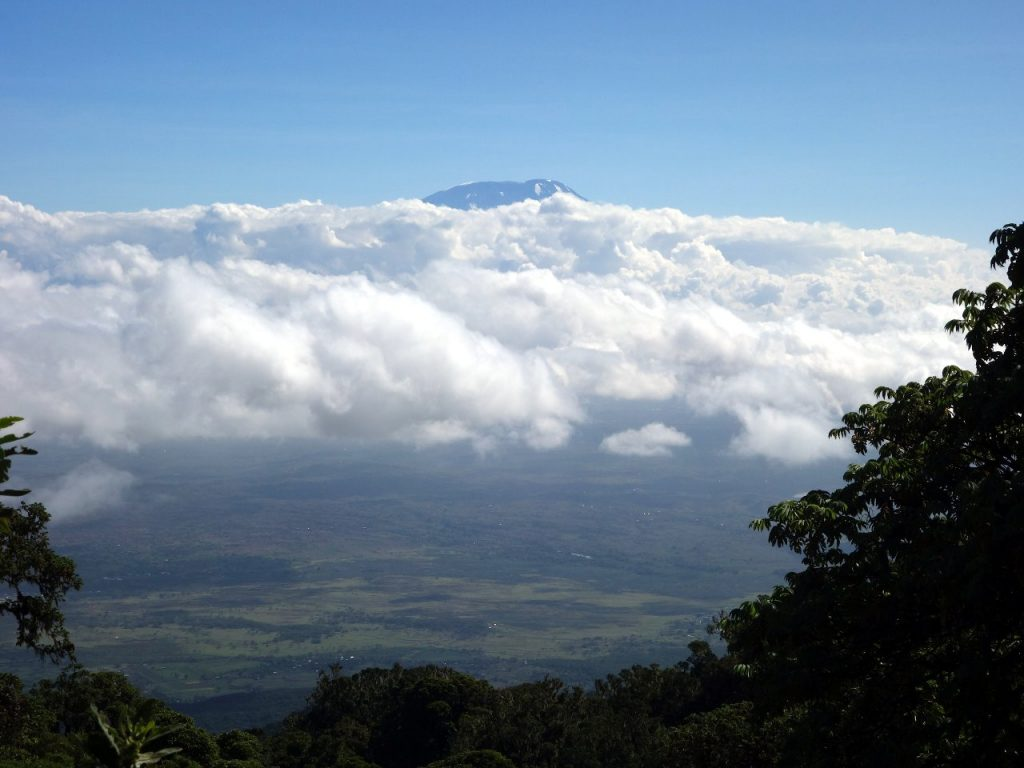 Through the trees we caught frequently glimpses of Kilimanjaro rising like an island above the clouds