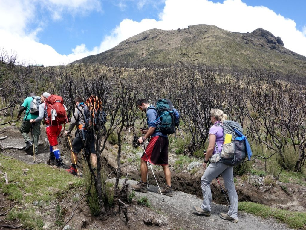 Below Little Meru a substantial area of forest had been burned to the ground by honey hunters
