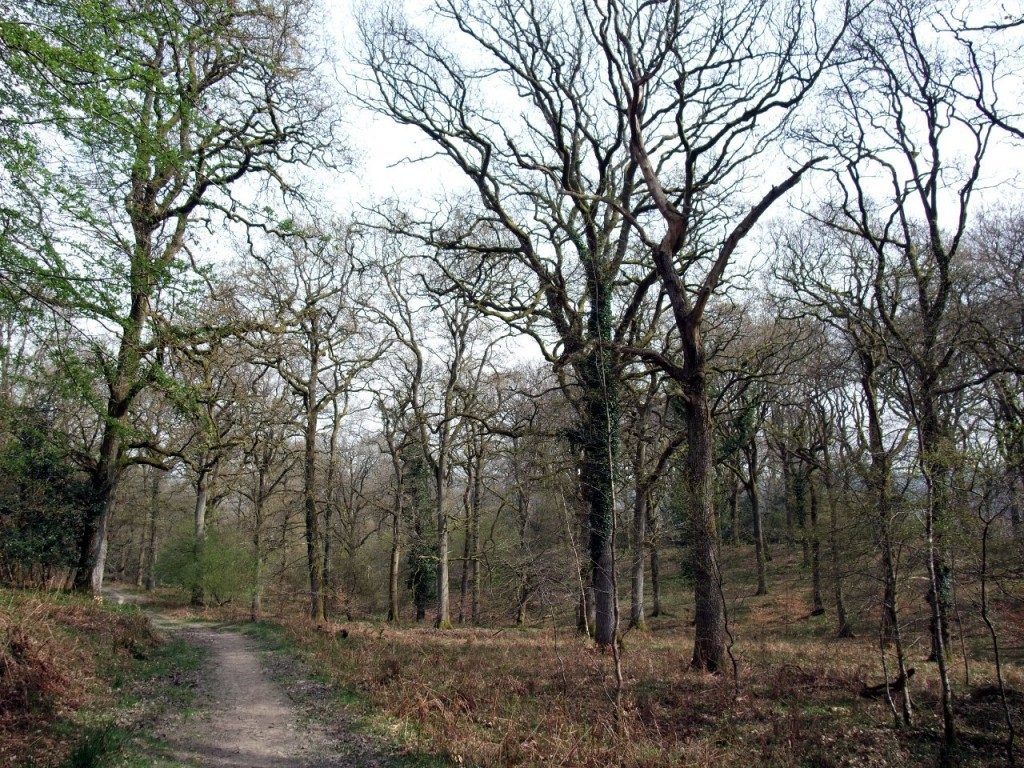 The Gloucestershire Way through Nagshead RSPB reserve