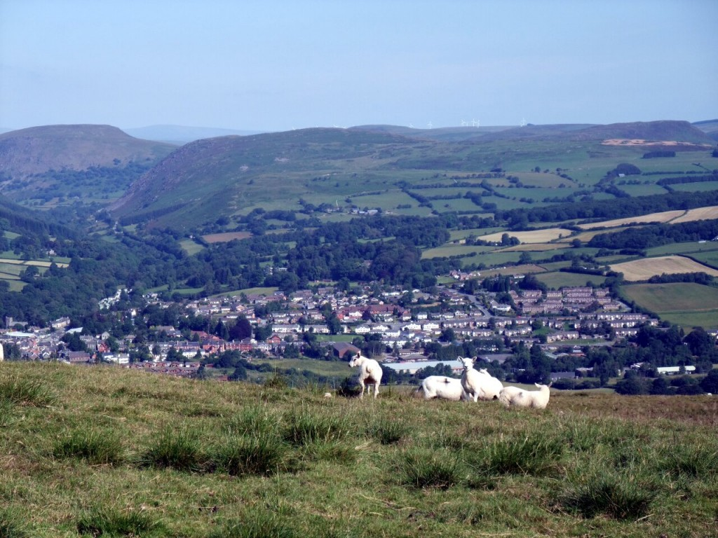 Sheep on Gwastedyn Hill above Rhayader