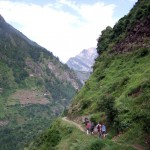 Trekking through the alpine zone high on the Manaslu Circuit trail