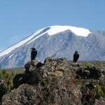 Kilimanjaro is a straightforward, if high altitude, trek up