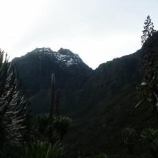 On bog hopping and jungle treks
