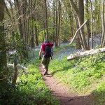 Woodland Trust bluebell woods on Offa's Dyke Path