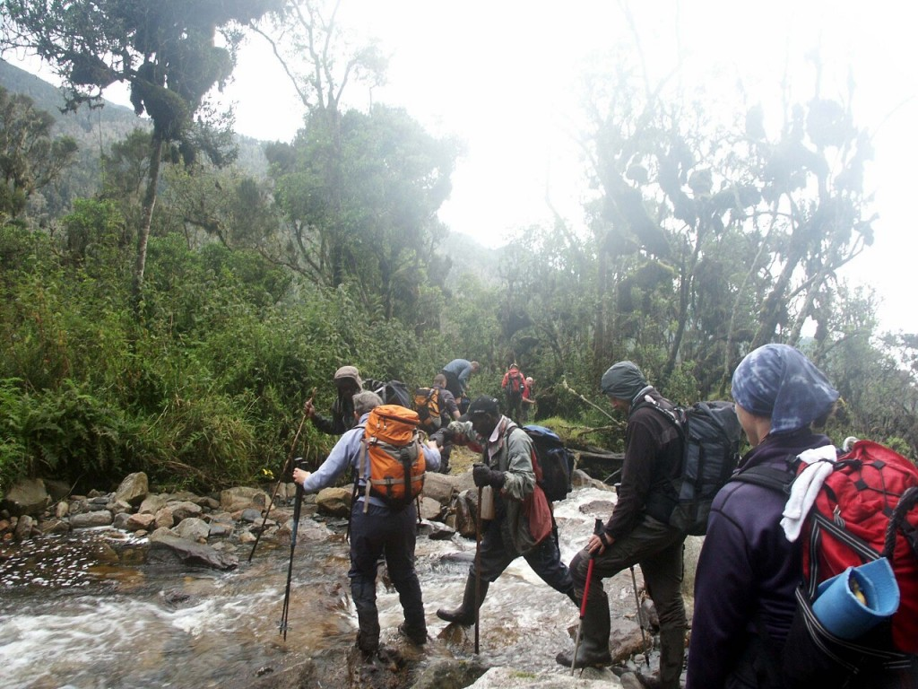 Another misty river crossing in the jungles of the Rwenzori Mountains, Uganda