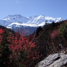 Tilman's expedition to the Annapurnas