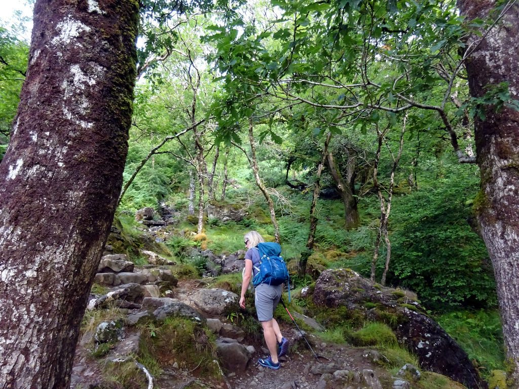 Ascending through 8,000-year-old woodland